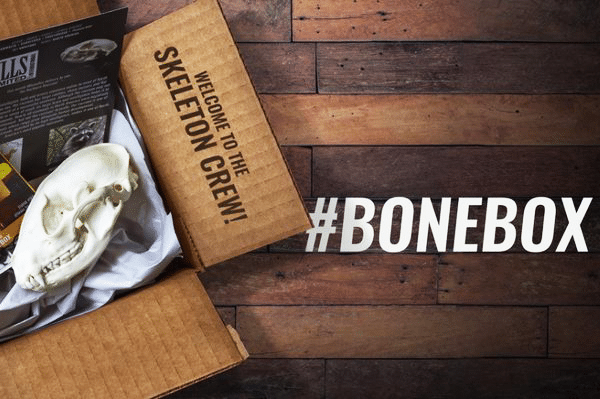 Skulls Unlimited International - A Monthly Bone Subscription Box