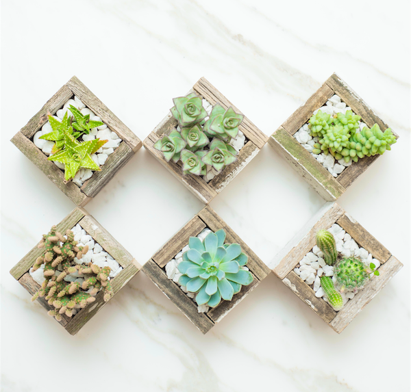 Succulent Studios - Decoration Box