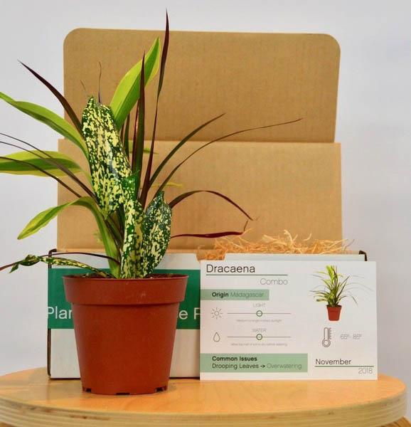 House Plant Box