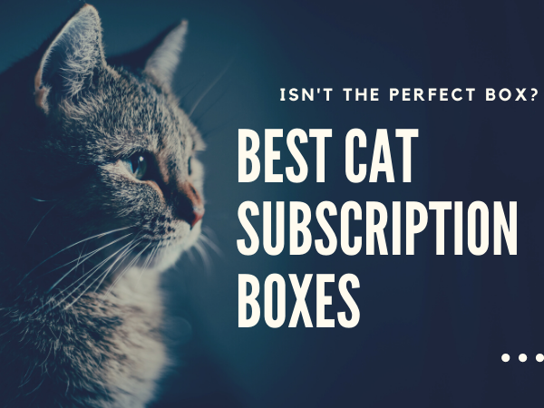 best cat subscription boxes